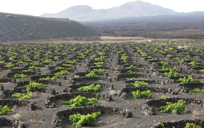 Resultado de imagen de vinos de lanzarote
