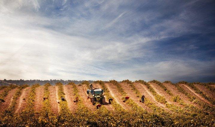 trabajos en viñedos