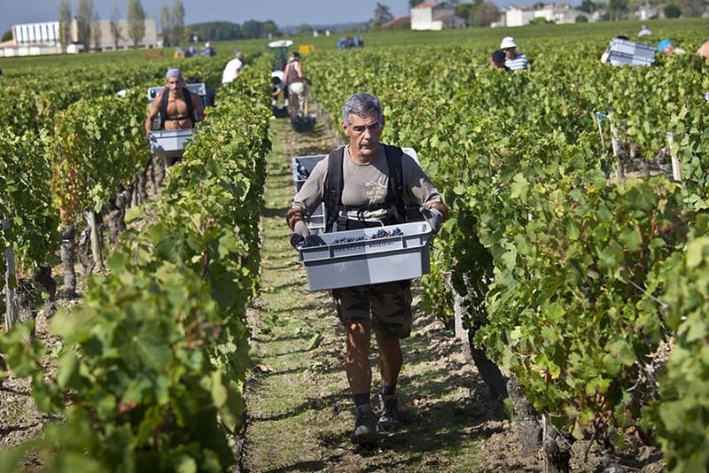 francia_vendimia_viticultura_vinedos