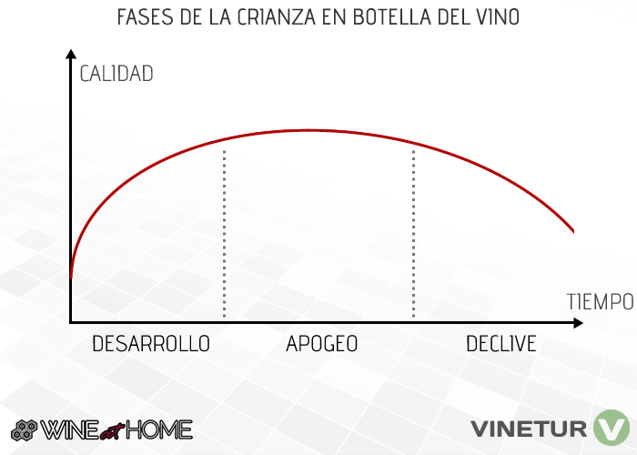 Fases del vino
