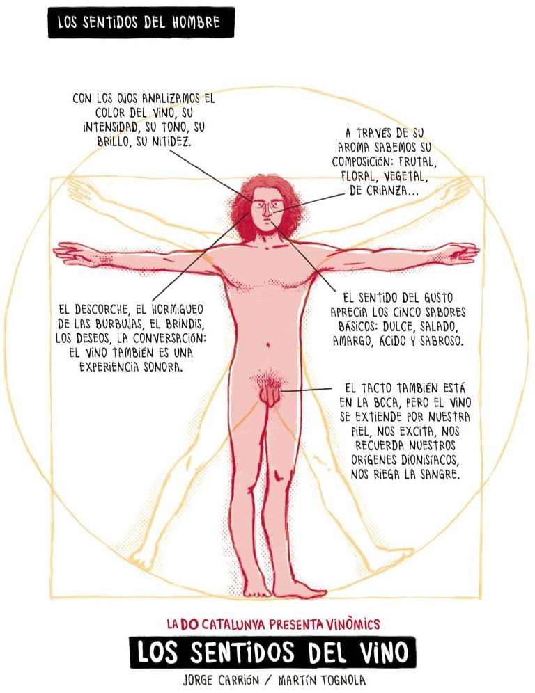 C mo influye el vino alrededor de los sentidos for El divan de los sentidos