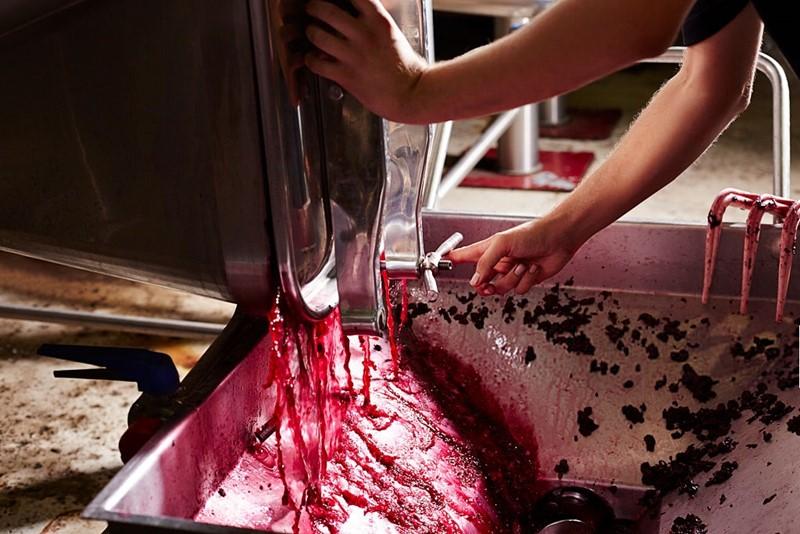 enología, elaboración de vino