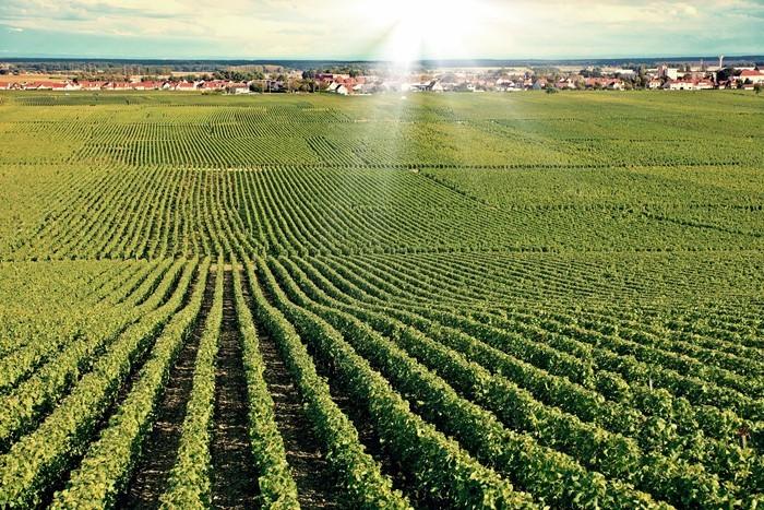 10 Consejos Para Sentirse Un Viticultor Y Cultivar Un