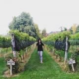 Mi corazón en el mundo del Vino
