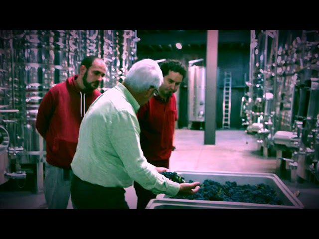 Vendimia vino Rioja Valdelacierva Grano a Grano